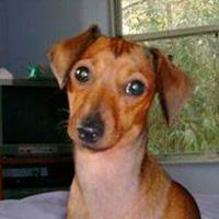 dog-Piper