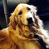 dog-Bella