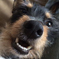 dog-Reggie