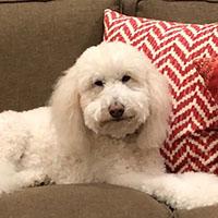 dog-Riley