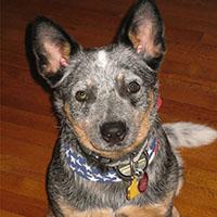 dog-Trudi